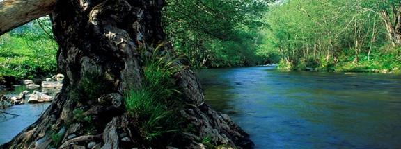 rio esva